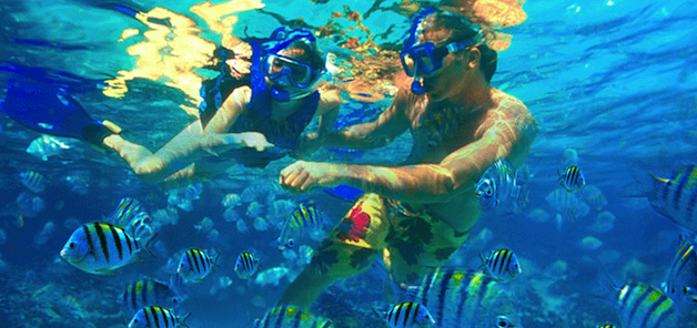 This is a photo of a man and girl snorkeling among fish in Martinique.
